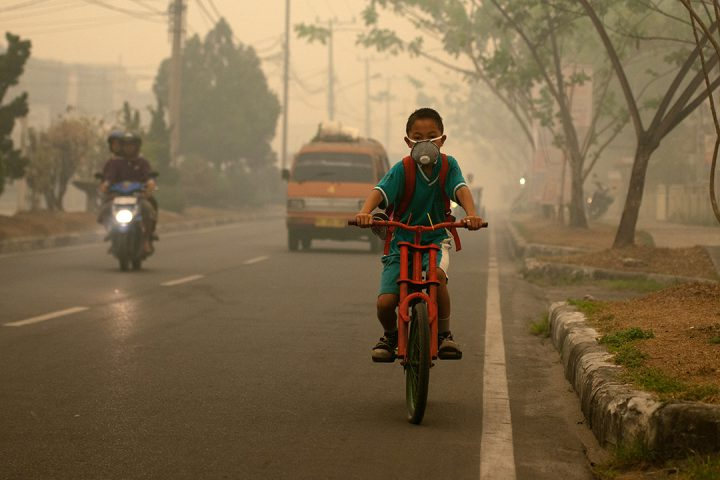 Photo by Aulia Erlangga/CIFOR